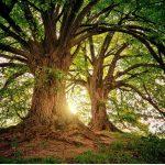 Zespół deficytu natury